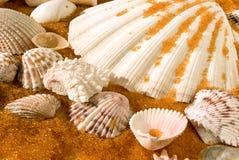 Shells auf goldenem Sand Stockbild