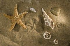 Shells auf Sand lizenzfreie stockfotos