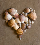 Shells auf Sand Lizenzfreies Stockfoto