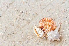 Shells auf sandigem Strand Stockfotografie