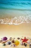 Shells auf Sandstrand stockfotos