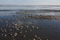 Shells auf Strand Lizenzfreie Stockfotografie