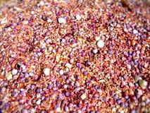 Shells auf Strand Stockfoto