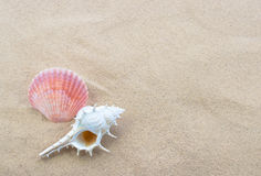Shells auf Strand Stockbilder