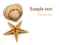 Shells auf Weiß Lizenzfreie Stockbilder