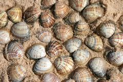 Shells, Australia Stock Photos