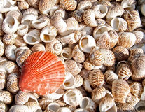 Shells bachgroung Stock Foto's