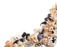Shells background Stock Photography
