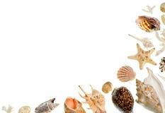 Shells background Stock Image