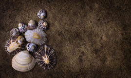 Shells background Stock Image