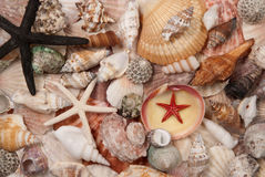Shells background Royalty Free Stock Photo