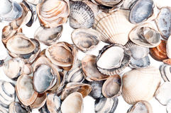 Shells, background Royalty Free Stock Photos