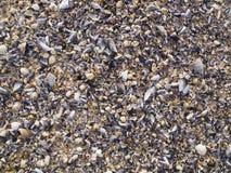 Shells background Royalty Free Stock Image