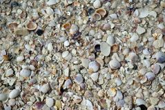 Shells background Royalty Free Stock Image