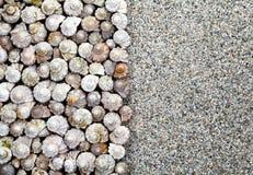 Shells Background Royalty Free Stock Photo