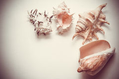 Shells background with white copy space Royalty Free Stock Photography