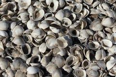 Shells bakgrund arkivfoton