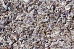 Shells bakgrund arkivfoto