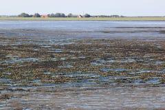Shells bank in dutch Wadden Sea near Ameland Royalty Free Stock Photography
