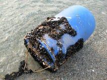 Shells on the barrel Royalty Free Stock Photos
