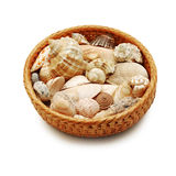 Shells in a basket Royalty Free Stock Photo