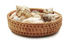 Shells in a basket Royalty Free Stock Image