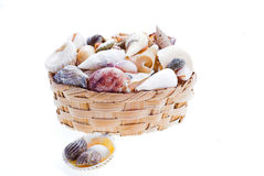 Shells & basket. Assignment; beach; logo; marine; ocean; sea; shells; spiral; visions; white; background; isolate; basket royalty free stock image