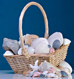 Shells In Basket. A Collection of Shells In Basket With Blue Background Royalty Free Stock Photo