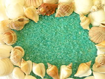 Shells on bath salt Stock Images