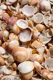 Shells at the beach Stock Photography