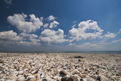 Shells beach Stock Photo