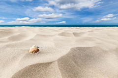 Shells on a beach. A couple of shell nuts on a tropical sandy beach. Dramatic blue cloudy sky stock image