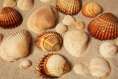Shells on a beach Stock Photography