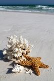 Shells On Beach. Collection of shells, coral and starfish sit on the beach with a background of blue water and breaking waves of foam on the beach at Destin stock photos