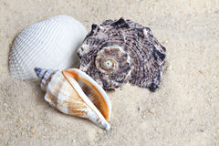 Shells on beach Stock Images