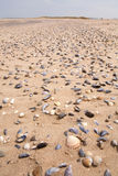 Shells on a beach Stock Photos