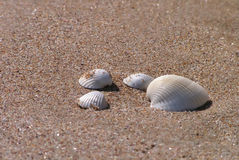 Shells on the beach. Four shells on the sand beach, in the light of the sun stock photo