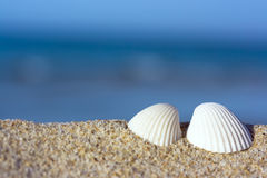 Shells on the beach Royalty Free Stock Photos
