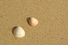 Shells in the beach Stock Photo