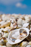 Shells on a beach. Sea shore covered with shells, macro Royalty Free Stock Image