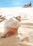 Shells on beach Stock Photos