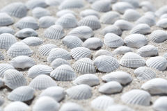 Shells on the beach Stock Image
