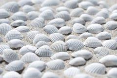 Shells on the beach Stock Image