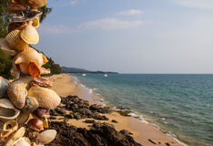 Shells beach Stock Image
