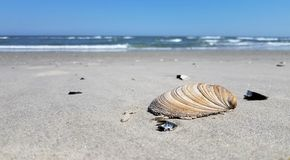 Shells on Beach stock photography