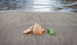 Shells on the beach. Beautiful shells on the beach waiting the summer Stock Photos