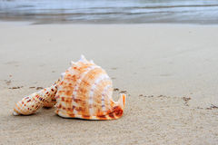 Shells on the beach. Beautiful shells on the beach waiting the summer Royalty Free Stock Image