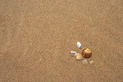 Shells on the beach. Beautiful shells on the beach waiting the summer Royalty Free Stock Images
