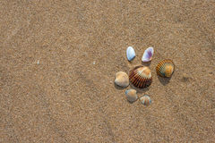 Shells on the beach. Beautiful shells on the beach waiting the summer Stock Image