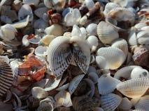 Black sea. Shells on the beach Stock Photos